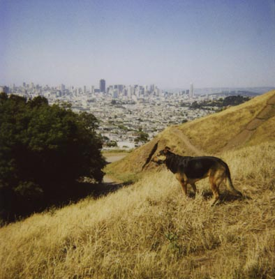 Chloe on Bernal Hill